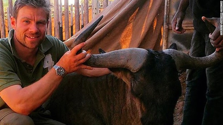 Vet Jonathan Cranston with wildebeest that may have infected him with zoonotic TB.