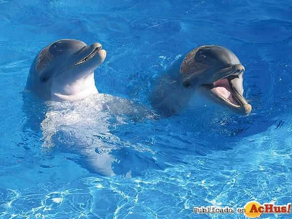 delfines-marineland-06072006_small