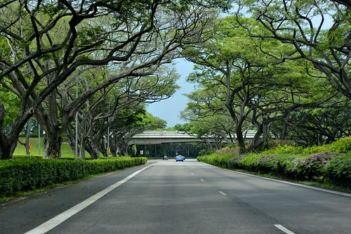 Tree lined streets Singapore