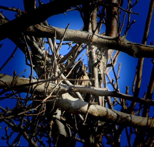 bird's nest pinhole (640x614)
