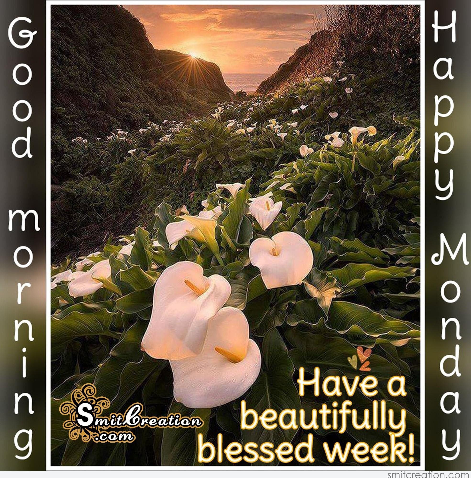 Good Morning And Happy Monday Images Top Colection For Greeting