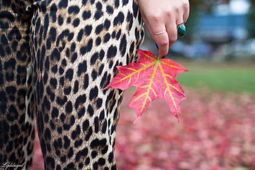 leaves fall-3.jpg