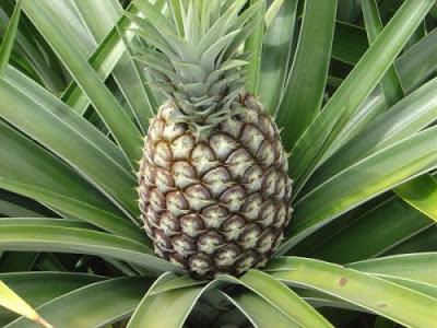 Aprenda a receita da água de abacaxi