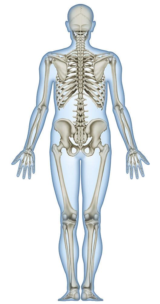 骨と筋肉 人体リアルイラスト