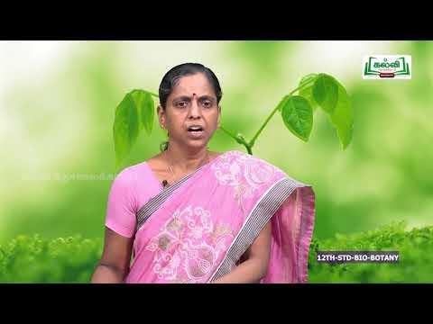 12th Botany தாவரங்களில் பாலிலா இனப்பெருக்கம் அலகு 1 Kalvi TV