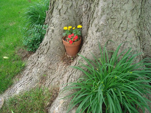 Flowerpot nestly in a tree hollow