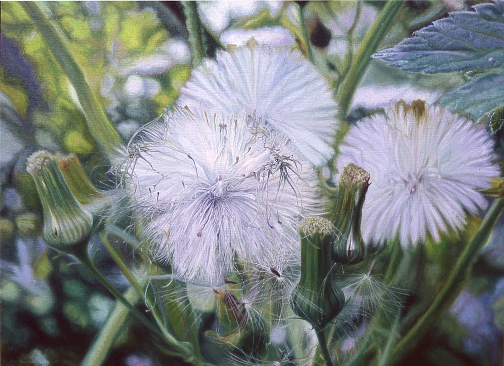 a dandelion expresses optimism!