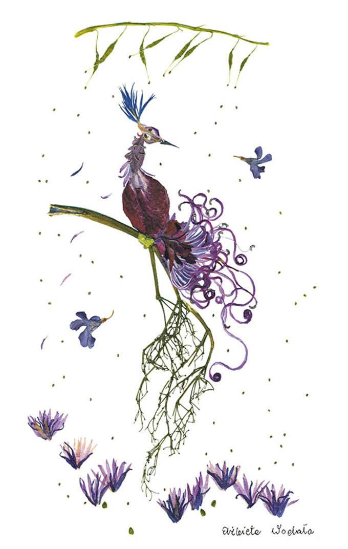 dried-floral-art-florotypie-elzbieta-wodala-12
