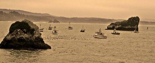 Trinidad Bay boats