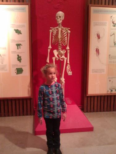 Stella en de skelet-imitatie