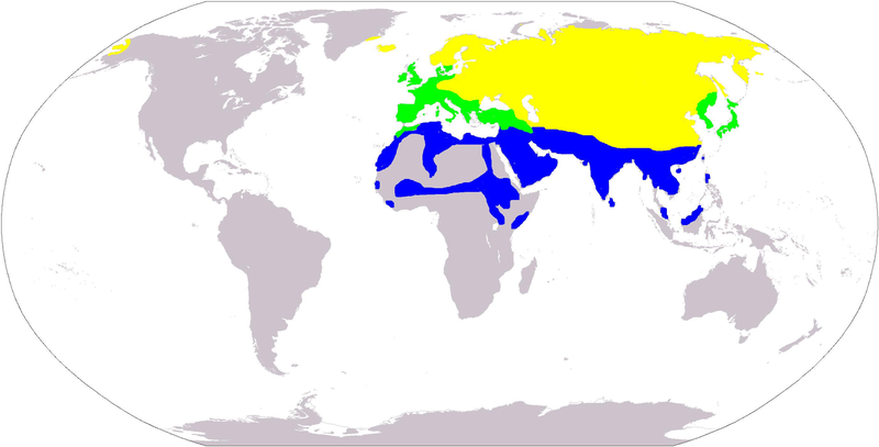 File:White wagtail distribution.PNG