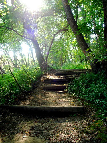 Wooded path by Lake Mendota