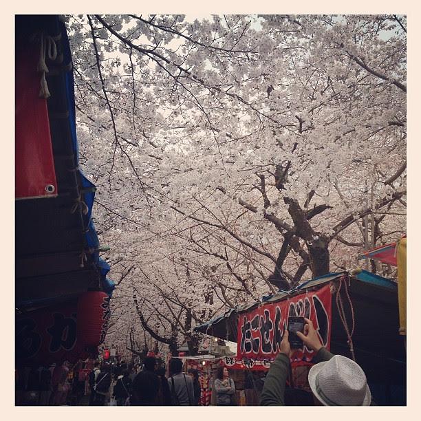 桜、屋台、神社 = 夢中的場景