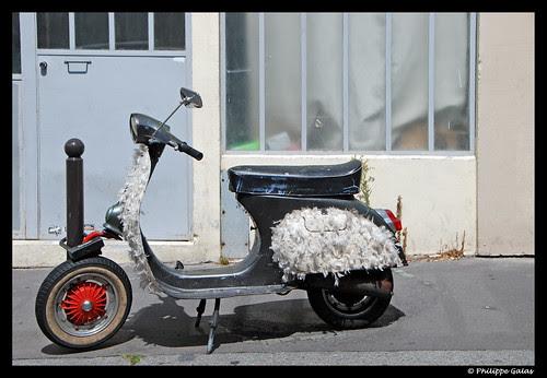 Le scooter à plumes