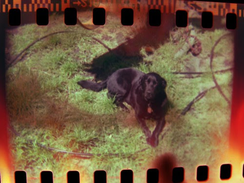Instamatic Dog