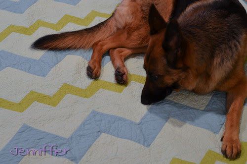 Zigzagged Quilt with Suzie inspecting it