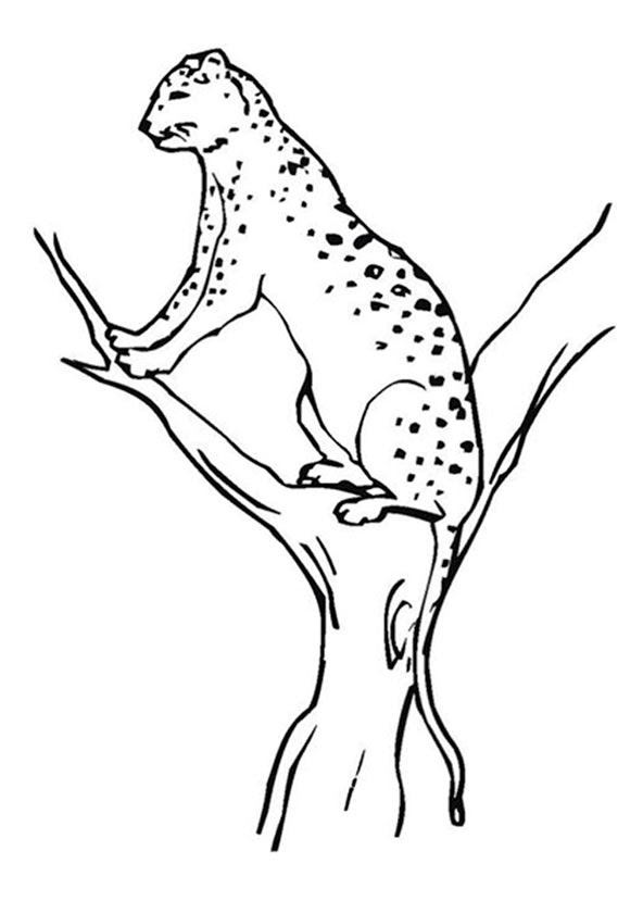 bilder zum ausmalen jaguar