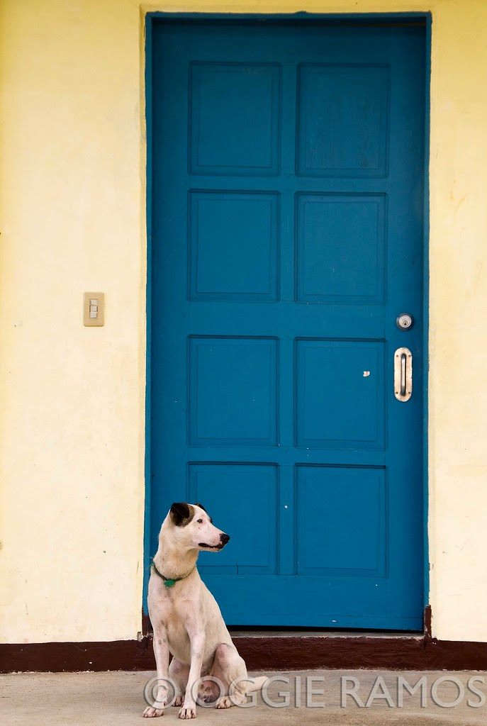 BP Batanes Sabtang Dog by the Blue Door
