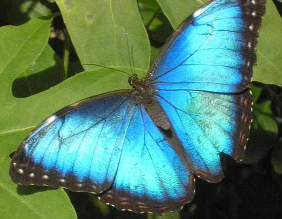And the BLUE BUTTERFLY for the MOST POPULAR POST goes to
