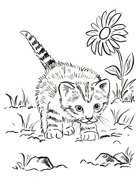kitten coloring page art starts  kids