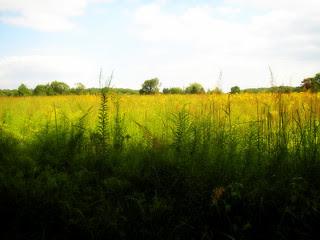 Fields of Gold, Willowwood! 2