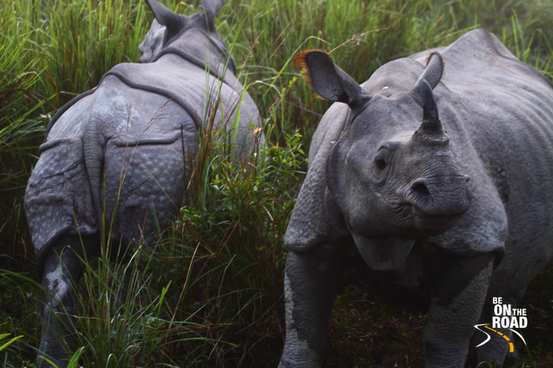 Rhino (Front and Back)
