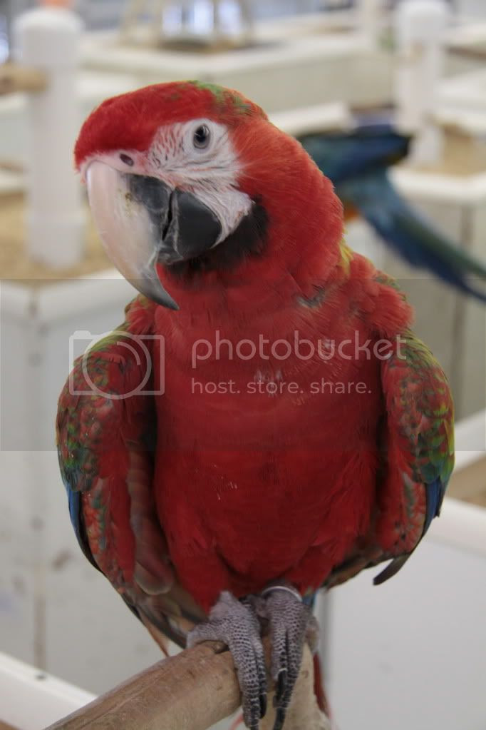 colorful parrots photo:  IMG_3711.jpg