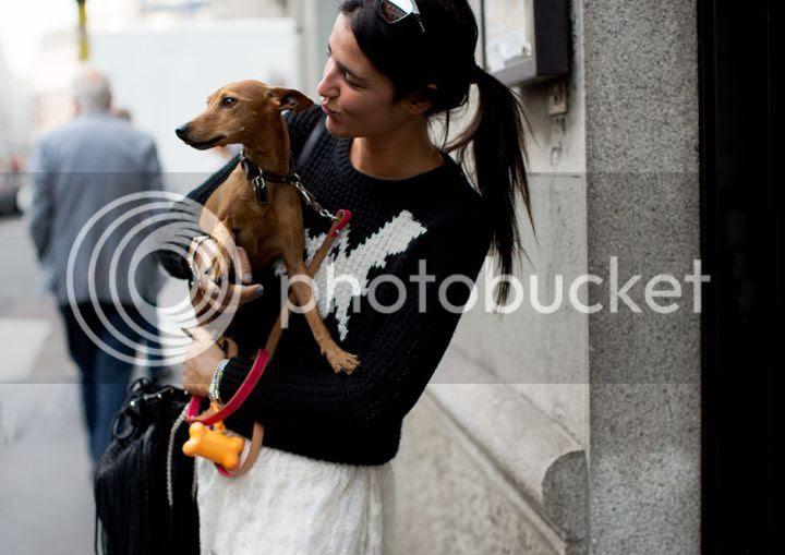 photo thesart-italiangreyhound_zpsaf821ab7.jpg