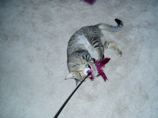 Little Ashley and the feather wand