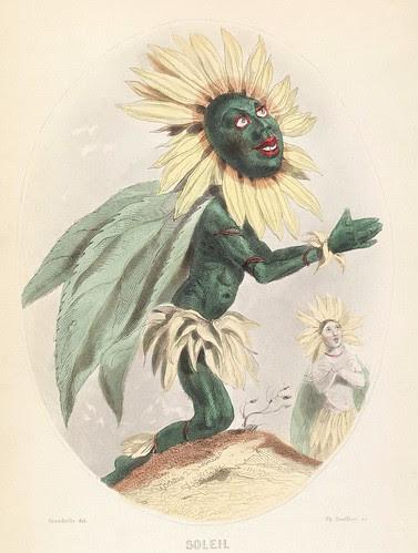 Soleil - Les Fleurs Animées - JJ Grandville