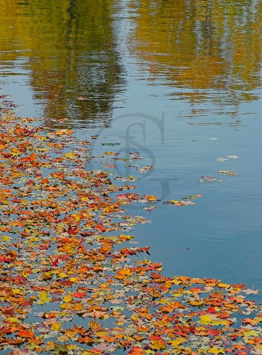 Orillia - Leafy Reflections - autumn leaves reflected in the waters of Port of Orillia