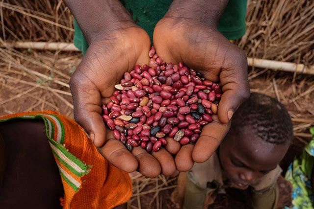 La ONU suministra semillas, herramientas y alimentos para combatir el hambre en la República Centroafricana