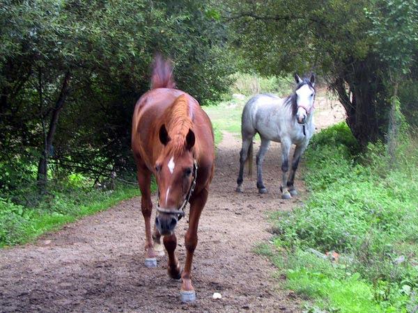 Resultado de imagem para imagens de cavalos no pasto
