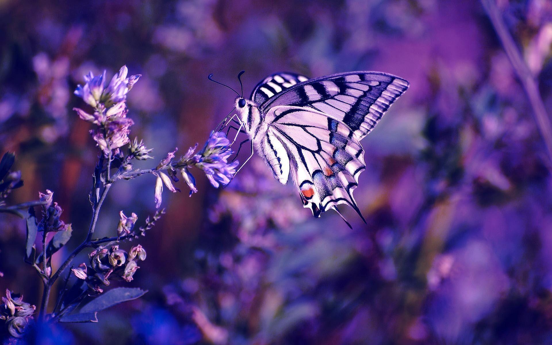 Free Wallpapers Butterflies - Wallpaper Cave