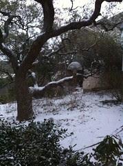 Backyard snow in Georgetown