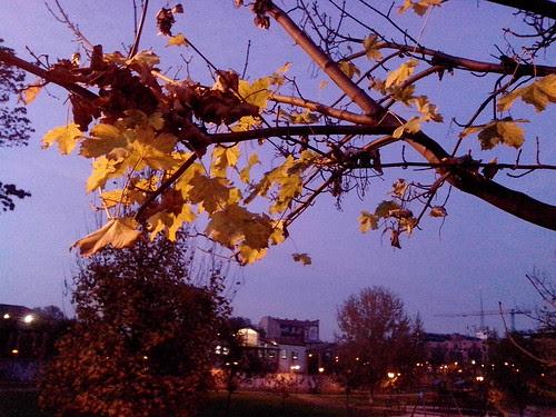 La luce con le foglie d'autunno by Ylbert Durishti