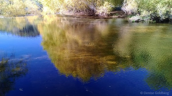 reflections of autumn leaves in the water just above Sabino Dam in Sabino Canyon Recreation Area