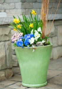Creative Planter Ideas   ThriftyFun