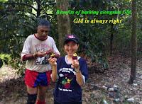 GM and Rachel 'stealing' mangosteens