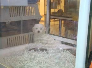 Vitrina del escaparate con un perrito