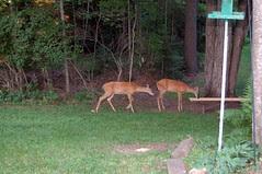 Jim & Bev's backyard