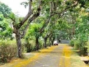 Maharashtra's 'Mountain Man' built 40km roads in 57 years
