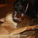 Hailey and Zaphod - The Hailey and Zaphod Chronicles