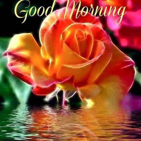 Pretty Good Morning Flower Quote Pictures Photos And Images For