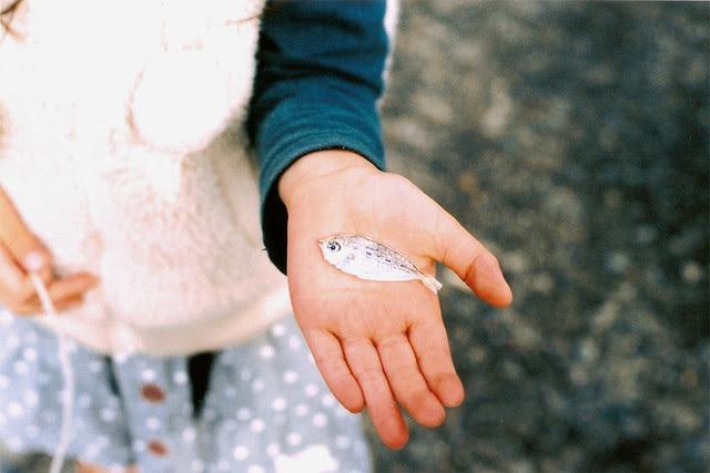 found dry fish, Yui