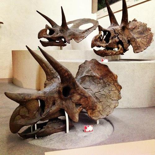 dinoskulls
