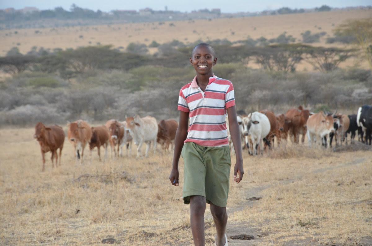 Menino de 13 anos inventa um engenhoso sistema para evitar que sua tribo siga matando leões
