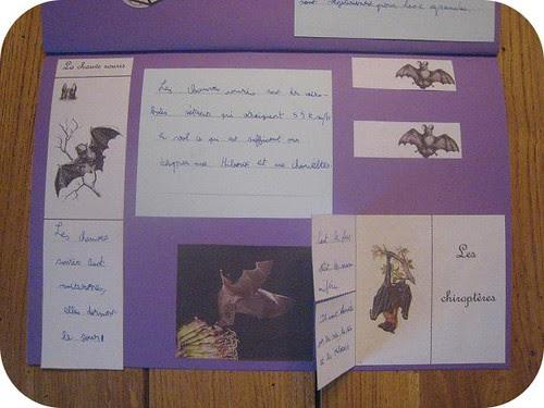 photos site lapbook Chauve souris9
