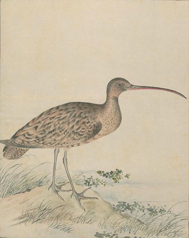 Ink + Watercolour  Bird sketch v