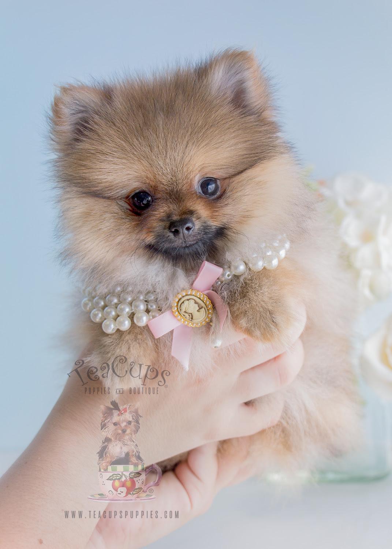 Cute Puppies Nyeri